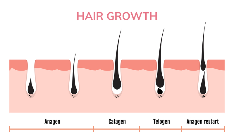 Normal Cycle of Hair Growth